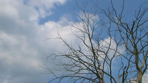 Tree With Clouds Time Lapse 02 Stock Video Footage