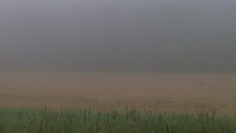 Fog Time Lapse Stock Video Footage