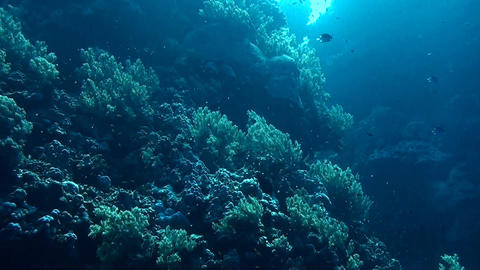 The coral reef Stock Video Footage