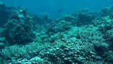 The Red Sea stock footage