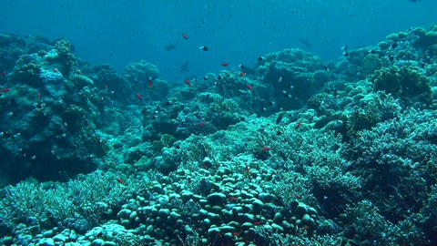 The Red Sea Stock Video Footage