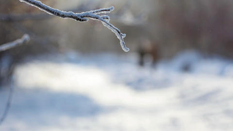 Frosty day Stock Video Footage