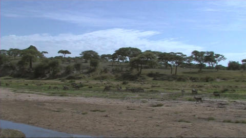 Wildlife of Tarangire Footage