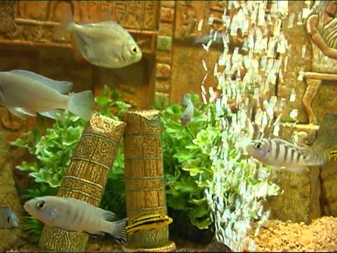 fish in aquarium Footage