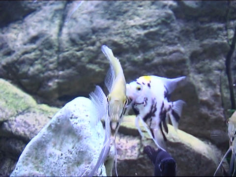 fish in aquarium Filmmaterial
