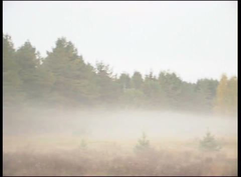 forest edge in fog Footage