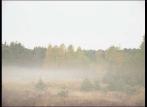 forest edge in fog Stock Video Footage