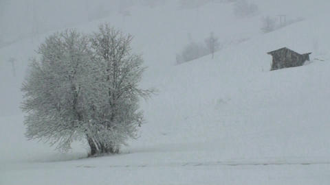 Snow falling Stock Video Footage