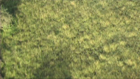 Aerial view of the Serengeti Stock Video Footage