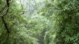 walking water bridge aqueduct rain jungle B Stock Video Footage