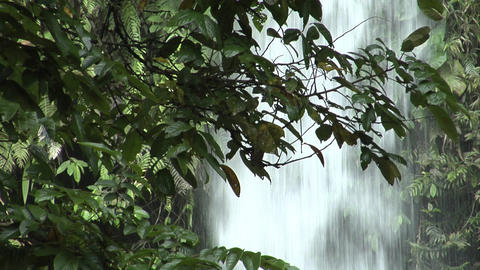 waterfall behind tree 1 Footage