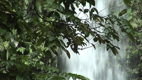 waterfall behind tree 1 Stock Video Footage