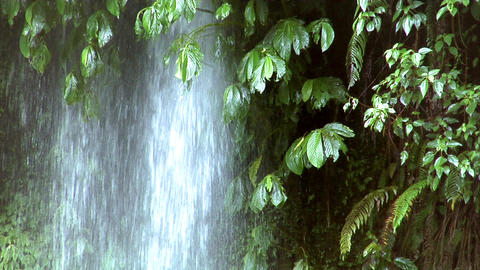 waterfall under tree Stock Video Footage