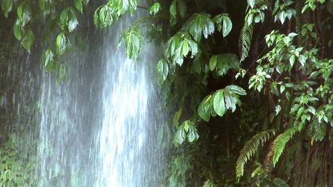 waterfall under tree Stock Video Footage