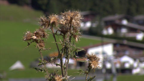 thistle in front of blurred ropeway Stock Video Footage