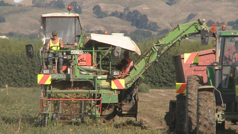tomato harvester Stock Video Footage