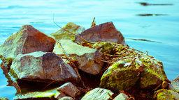 Stones In A Pond stock footage