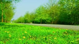 dandelions flowers beside the road in the woods Footage