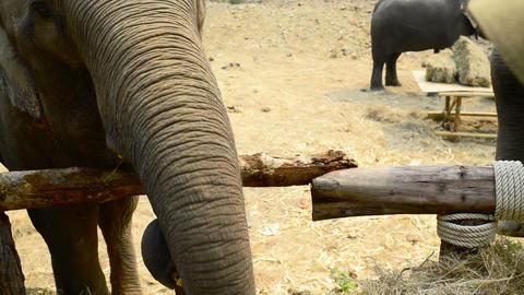 Feeding Elephants Footage
