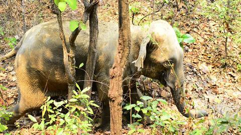 Elephant Trek Footage