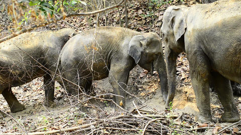 Elephant Intimacy Footage