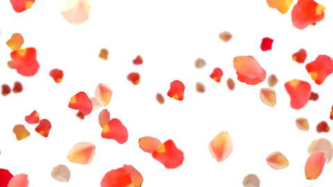 Fall petal Animation