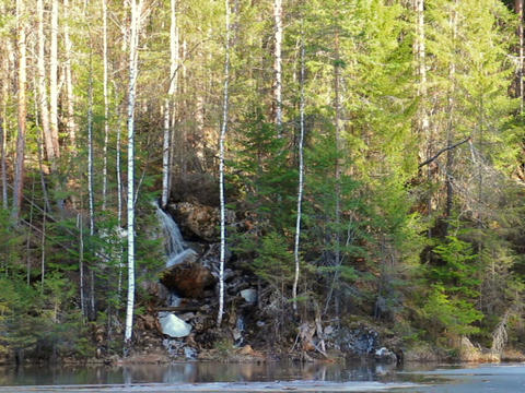 In coniferous forest waterfall. panorama. 640x480 Footage