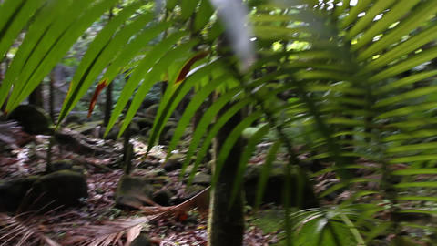 Moving Through Jungle Footage