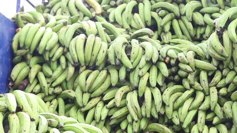 Green plantains (bananas) Footage