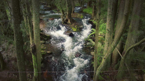 Moody Forest Creek View From Above stock footage