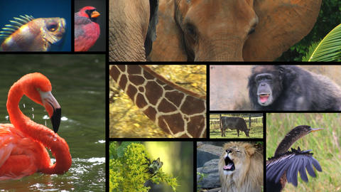 Animal Montage 3 Live Action