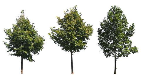 Three Trees on White Footage