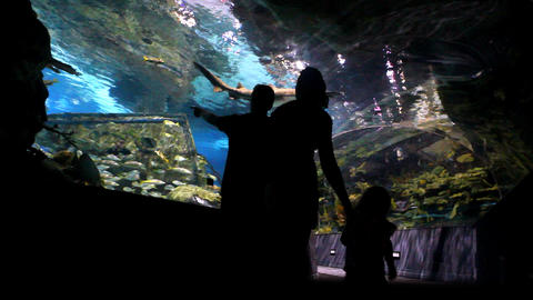 Family At Aquarium stock footage