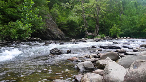 Forest Stream 2 Footage