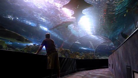 Shark Tank Footage