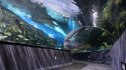 Walk-Through Aquarium Footage