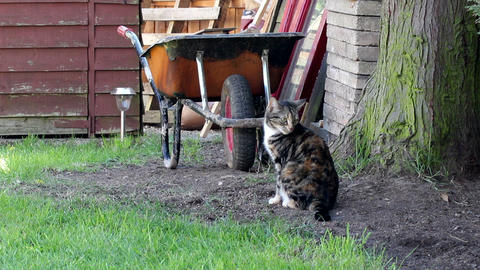 Striped cat sits in the garden in front of the whe Live Action