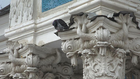 Dove on the capitals of the columns. 4K Footage