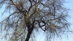 Bird nest on top of the tree Footage