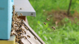Bees flying into a beehive - slow motion 1 Live Action