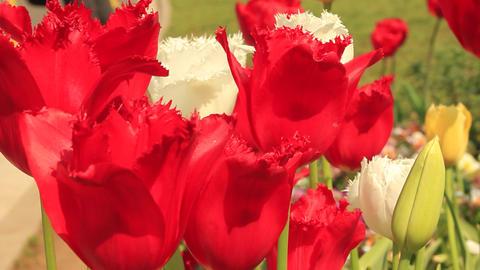 Shibuya_Yoyogi Park_flower Footage