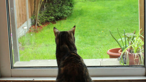 Cat Looking At The Window On The Garden stock footage