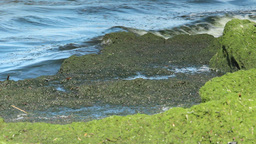 Eutrophication of the Baltic Sea 3 Footage