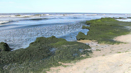 Eutrophication of the Baltic Sea 5 Footage