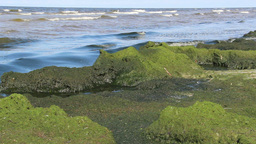 Eutrophication of the Baltic Sea 1 Footage