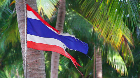 waving ripped flag of thailand against palm trees Footage