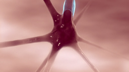 Communicating neurons. B Animation
