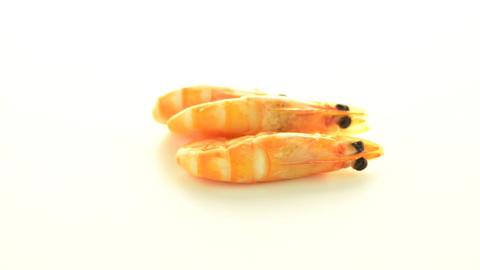 Three shrimps Footage
