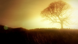 Romantic solitary Tree HD Stock Footage Footage