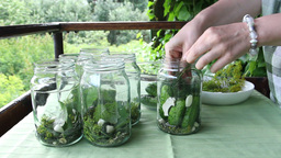 Woman preparing sour cucumbers. Preserves for wint Footage